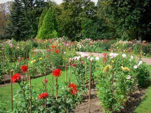 La Source floral park - Dahlias garden (blooming dahlias)