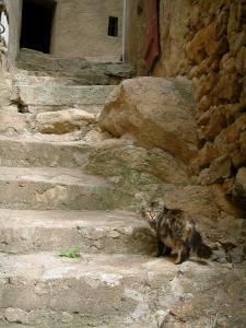 Speloncato - Narrow street (stairway) in the village and a cat