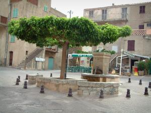 Speloncato - Square of the village with its fountain and its tree, houses in background (in the Balagne region)