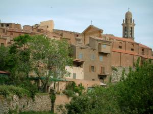 Speloncato - Houses in the village and trees (in the Balagne region)