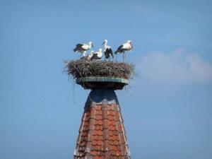 Storks - Nest with storks on a bell tower