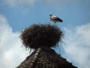 Storks - Bell tower with a nest and a stork, clouds in the sky