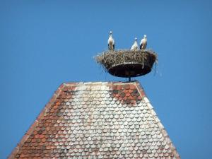 Storks - Nest and storks on a tower