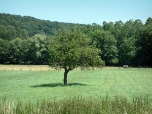Sundgau - Meadow, trees and forest