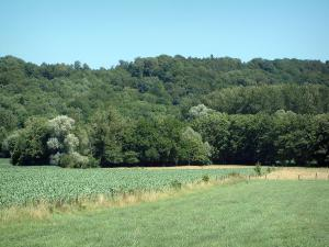 Sundgau - Pasture, field, trees and forest