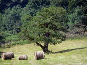 Swiss Normandy (Suisse Normande) - Tree and hay bales in a field