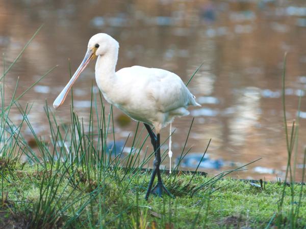Le Teich bird reserve - Tourism &