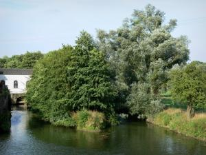 Thiérache - Oise valley: River Oise and trees