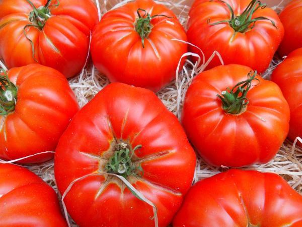 La tomate de marmande guide gastronomie vacances for Vers dans les tomates