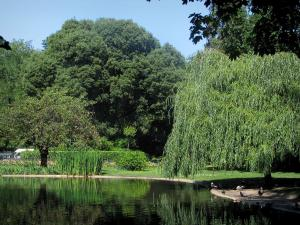 Toulouse - Royal garden: pond and trees