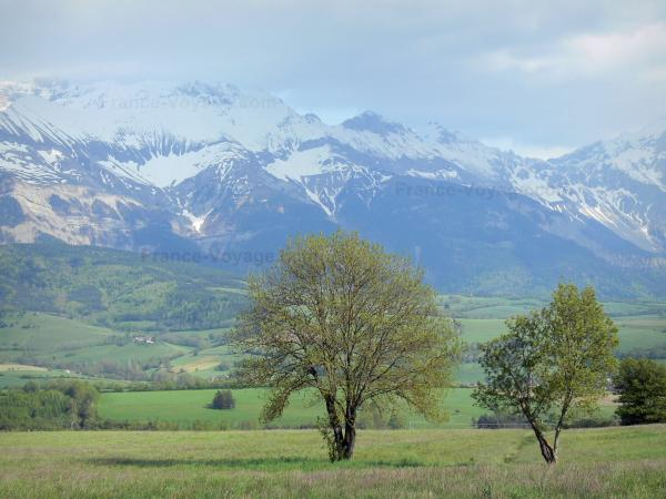 Trièves - Trees, pastures and snow-capped mountains