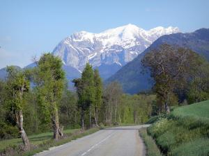 Trièves - Road lined with trees and meadows overlooking the snow-capped mountains
