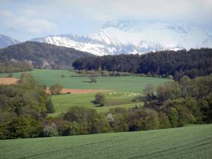 Trièves - Pastures, trees, forest and snowy mountains (snow)