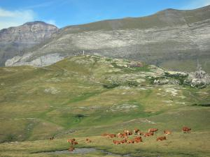 Troumouse cirque - Herd of cows, pastures, trail leading to the viewpoint of the Virgin statue, and mountains of the cirque shaped like a natural wall in the background; in the Pyrenees National Park