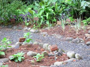 De Magische Tuin : Magische tuin in het forest u stockfoto emaria