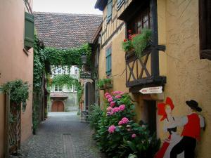 Turckheim - Narrow street and its houses decorated with plants and flowers
