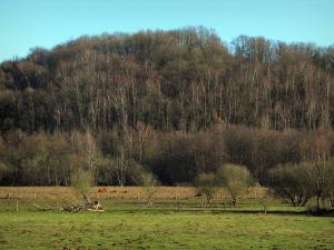 Upper Chevreuse Valley Regional Nature Park - Trees and meadows
