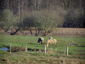 Upper Chevreuse Valley Regional Nature Park - Horses in a prairie and trees