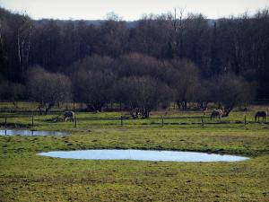 Upper Chevreuse Valley Regional Nature Park - Water ponds, horses in a prairie and trees