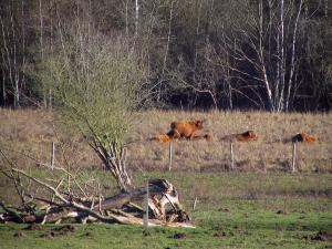 Upper Chevreuse Valley Regional Nature Park - Cows in a meadow and trees