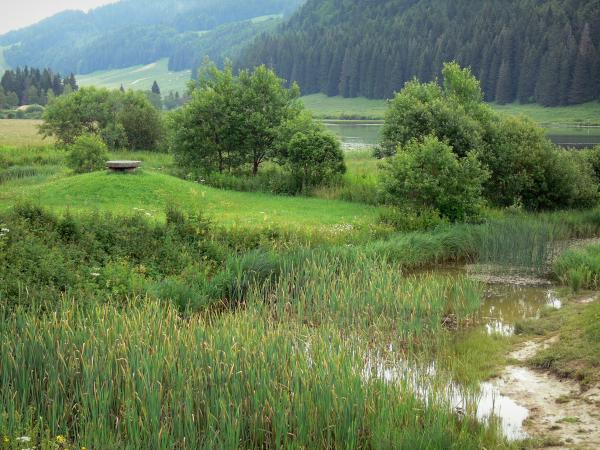 The Upper Jura Regional Nature Park - Tourism, holidays & weekends guide in Auvergne-Rhône-Alps