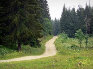 Upper Jura Regional Nature Park - Road lined with wild flowers and spruces (trees)