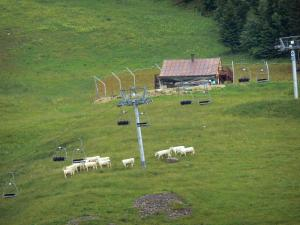 Upper Jura Regional Nature Park - Ski resort of Les Rousses in the summer: chairlift (ski lift), herd of cows, meadows (alpages), chalet and spruces (trees)
