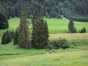 Upper Jura Regional Nature Park - Alpine pastures (high mountain pasture) and spruces (trees)