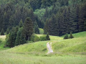 Upper Jura Regional Nature Park - Footpath lined with prairies and spruces (trees)