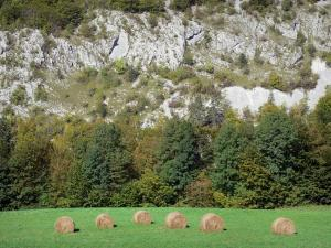 Upper Jura Regional Nature Park - Jura mountain range: bales of hay in a meadow, trees and mountain