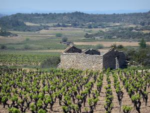 Upper Languedoc Regional Nature Park - Ruins of a stone hut, vineyards and trees