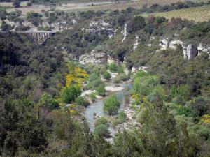Upper Languedoc Regional Nature Park - River lined with trees, blooming brooms, rock faces and vineyards