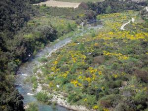 Upper Languedoc Regional Nature Park - River, shrubs, blooming brooms and trees