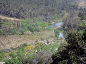 Upper Languedoc Regional Nature Park - River, shrubs, trees, blooming brooms and vineyards