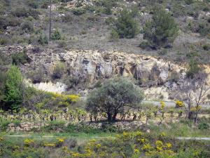 Upper Languedoc Regional Nature Park - Cliff, vineyards, brooms in flowers and trees