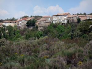 Upper Languedoc Regional Nature Park - Houses of a village, trees and shrubs