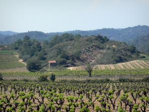 Upper Languedoc Regional Nature Park - Vineyards and small hut