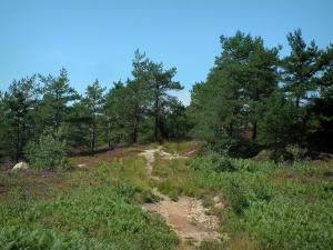 Upper Languedoc Regional Nature Park - Vegetation, footpath and trees