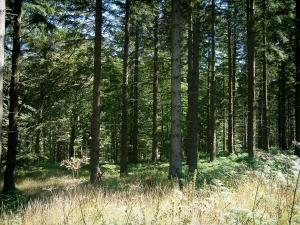 Upper Languedoc Regional Nature Park - Vegetation and trees in a forest