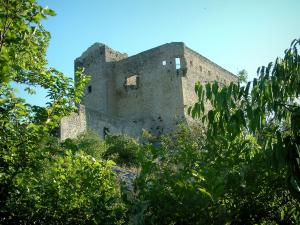 Vaison-la-Romaine - Castle surrounded by trees