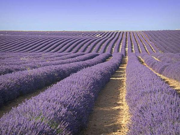 Valensole plateau - Tourism, holidays & weekends guide in the Alpes-de-Haute-Provence