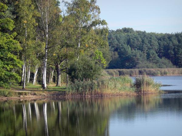 La Vallée lake - Lake, reeds, shore and trees of Orléans forest (forest massif)