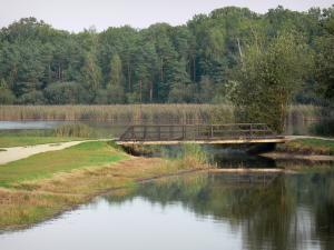 La Vallée lake - Lake, small wooden bridge, reeds and trees of Orléans forest (forest massif)