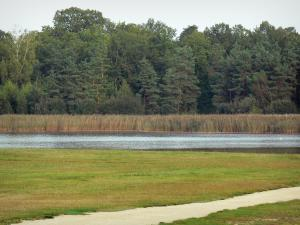 La Vallée lake - Road, prairie, lake, reeds and trees of Orléans forest (forest massif)