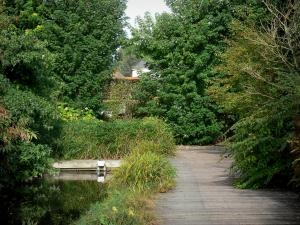Valloires gardens - Marsh garden (inland waterways, path and trees)
