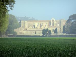 Valmagne abbey - Cistercian abbey, field and trees