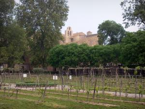 Valmagne abbey - Cistercian abbey, trees and vineyards