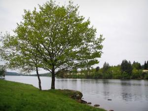 Vassivière lake - Shore, trees and artificial lake