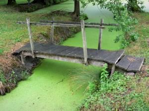 Venezia verde del marais poitevin 15 immagini di qualit for Lenticchia d acqua
