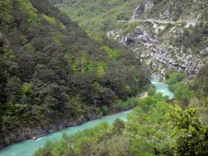 Verdon gorges - Verdon Grand canyon: Verdon river lined with trees; in the Verdon Regional Nature Park